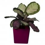 Aga Flower Pots square Pink