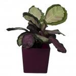 Plum Flower Pots square Plum