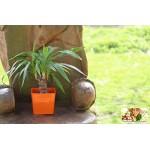 Aga Flower Pots square Orange