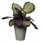 Flower Pots Crown -Ecru
