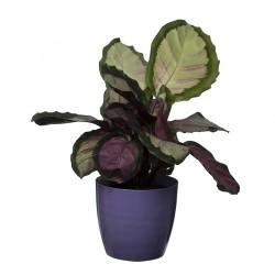Blue Violet Marble Flower Pot