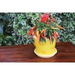 Yellow Leaves Keramo Flower Pot