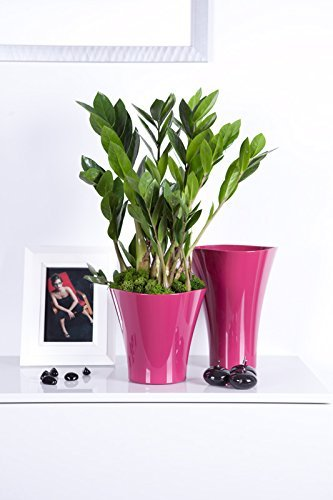 Plant pots wholesale